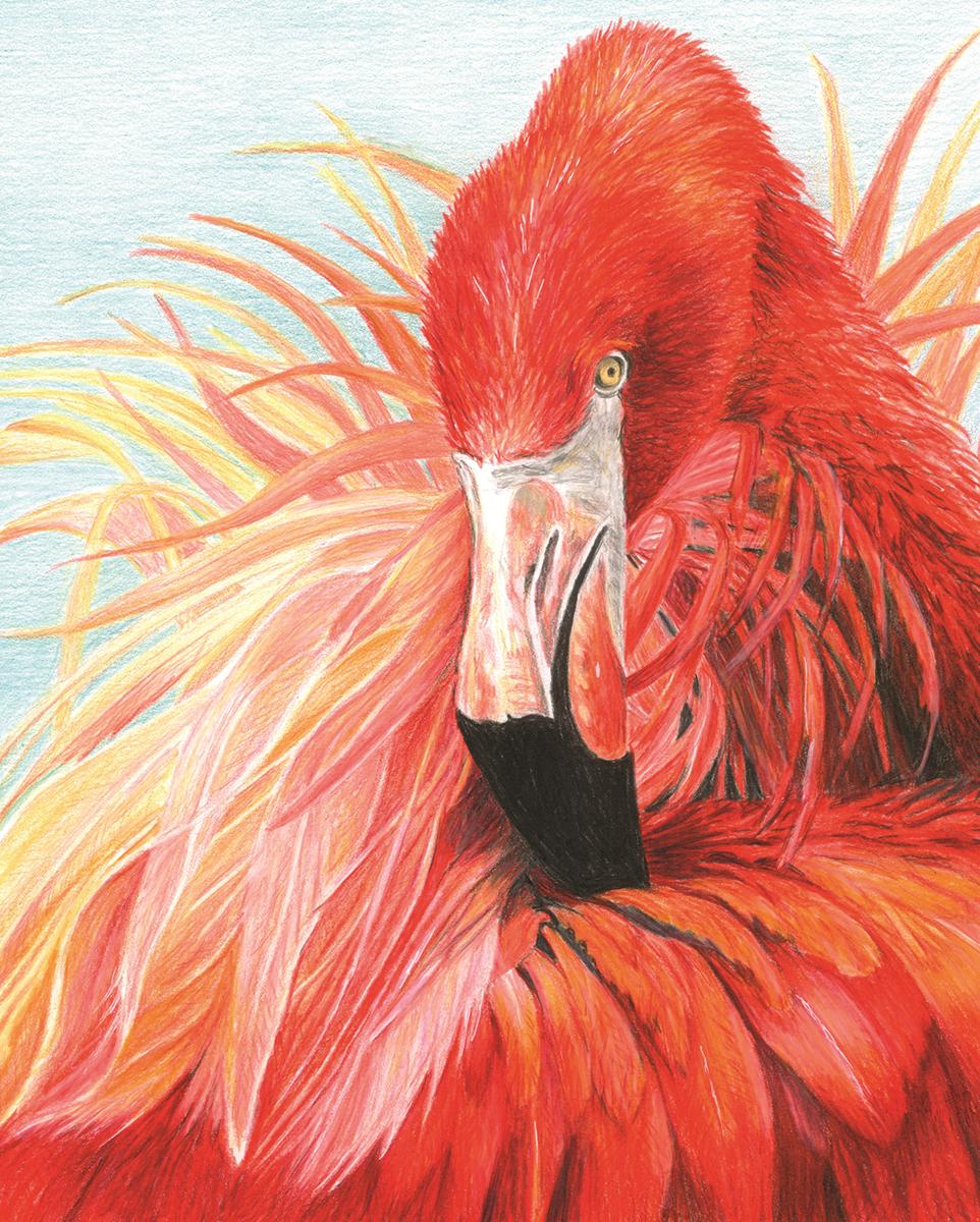 Royal Langnickel Cpn23 Flamingo Malen Mit Buntstifte Mit Buntstiften