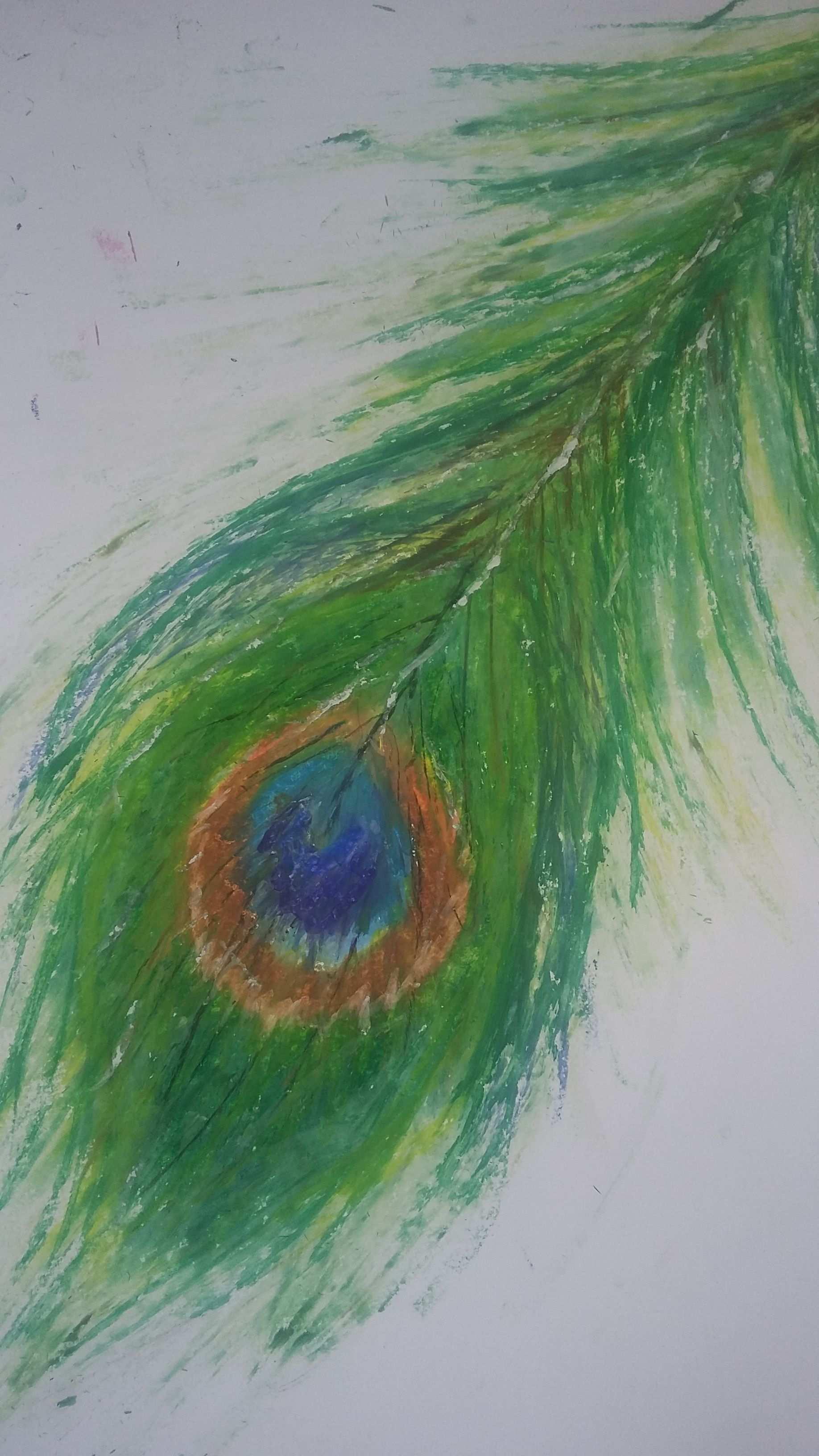 Peacock Feather Drawing Pfauenfeder Pfau Olkreide Zeichnung Olkreide Malen Zeichnungen Malen Und Zeichnen