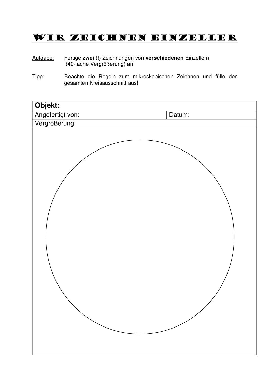 Wir Zeichnen Einzeller Vorlage Zum Zeichnen Unterrichtsmaterial Im Fach Biologie Zeichnen Vorlagen Unterrichtsmaterial