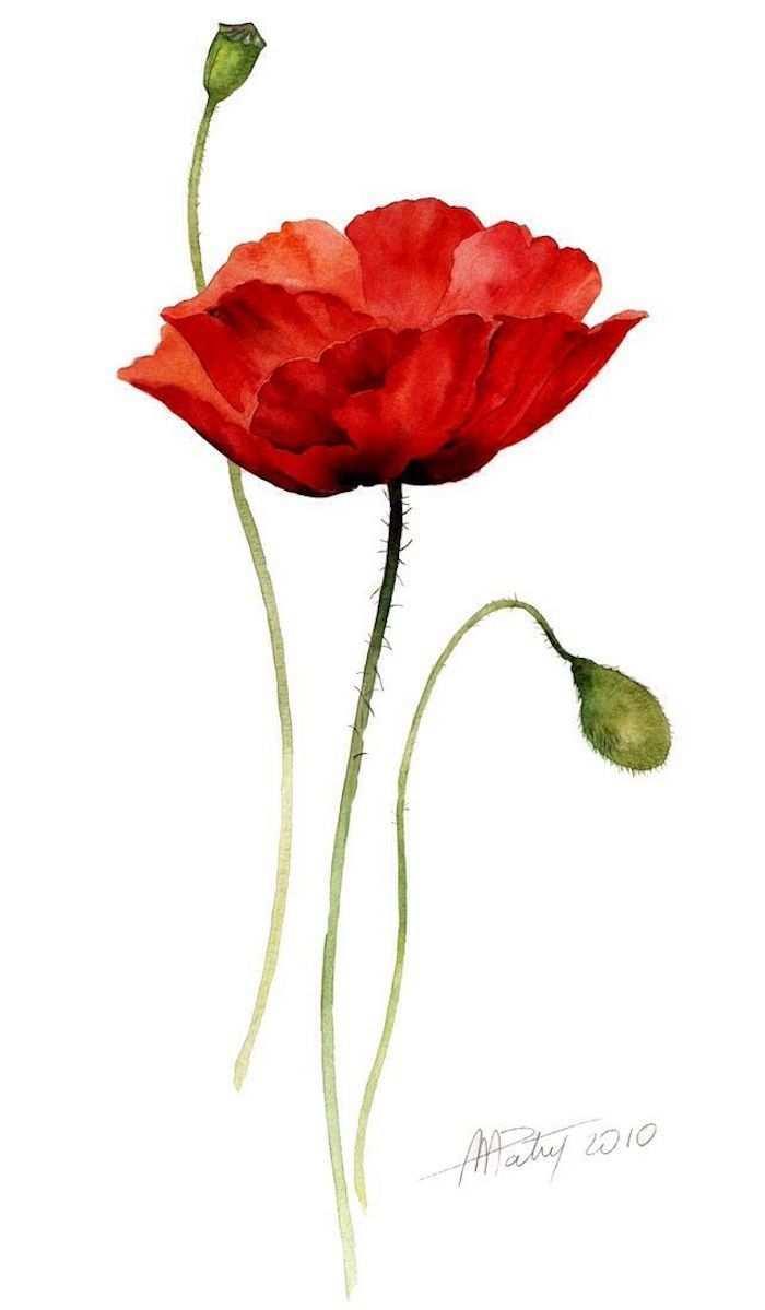 Bilder Zum Nachzeichnen Fur Anfanger Und Fortgeschrittene Archzine Net Schone Zeichnungen Wasserfarbenblumen Blumen Aquarell