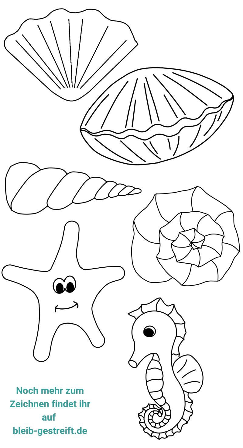 Muschel Zeichnen Lernen Eine Sammlung Von Anleitungen Muscheln Zeichnen Zeichnen Lernen Zeichnen