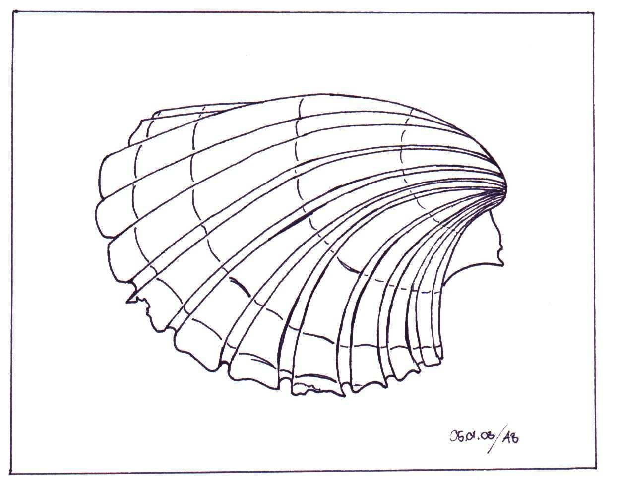 Muschel Im Sand Muscheln Zeichnen Zeichnung Muscheln