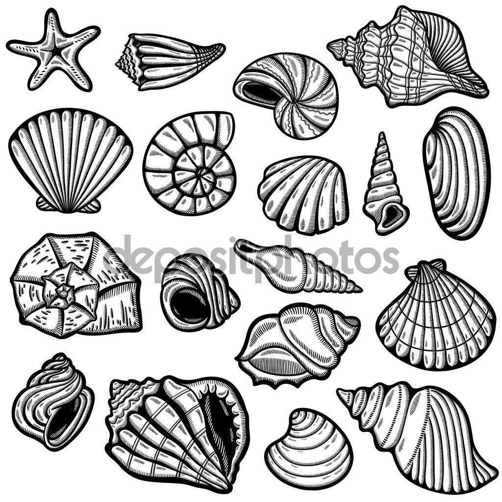 Image Result For Sea Shell Line Drawing Shell Drawing Drawings Shell Tattoos