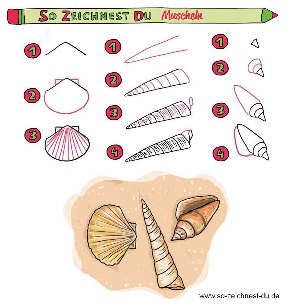 Muschel Zeichnen Muscheln Zeichnen Zeichenschule Zeichnen Lernen