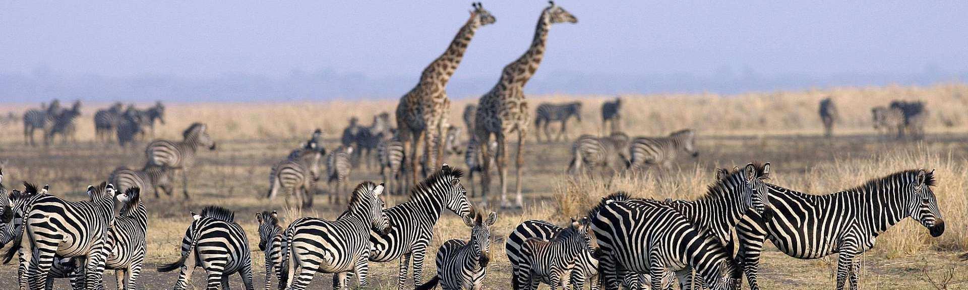 Tansania Praktische Hinweise