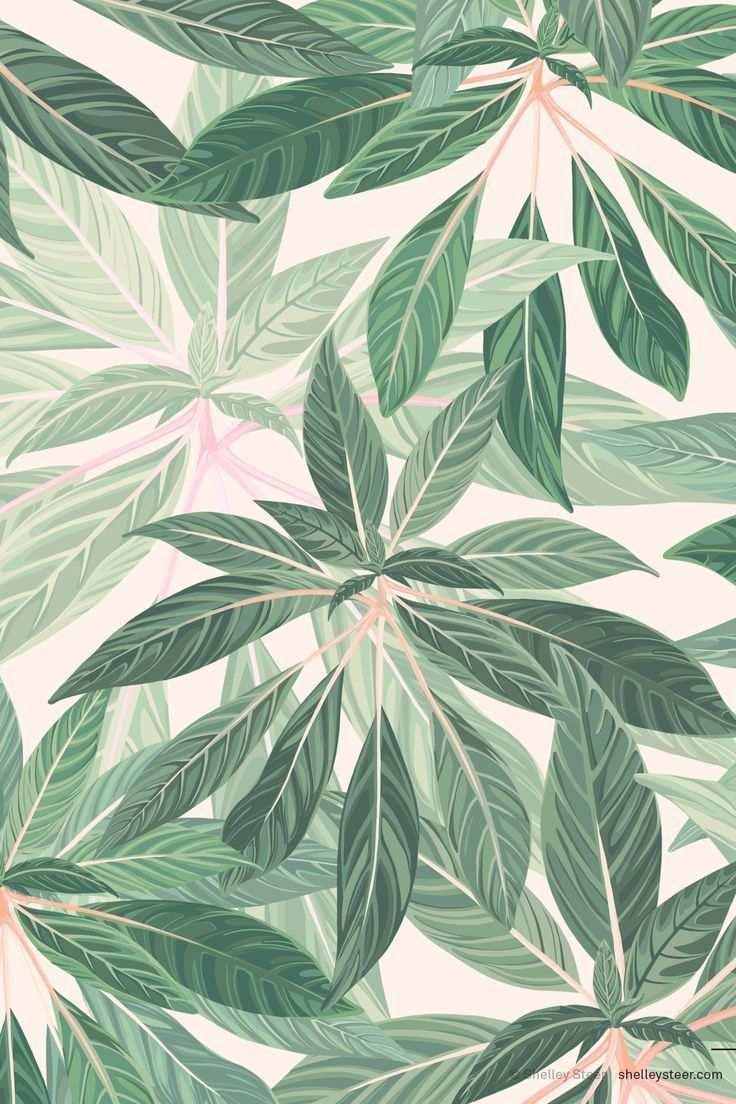Belaubtes Muster Botanical Illustration Belaubtes Botanical Illustration Muster Tapete Grun Mustertapete Hintergrundbilder