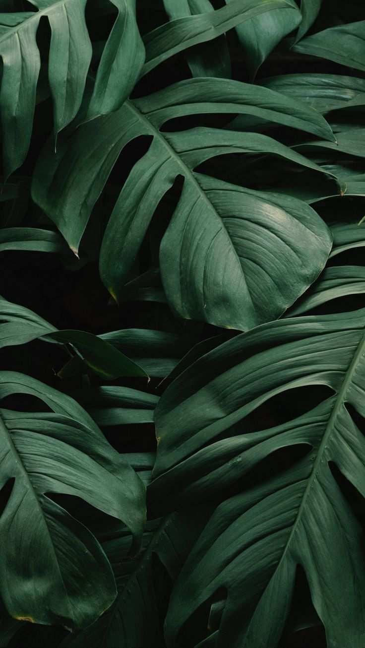 Pin Auf Nature