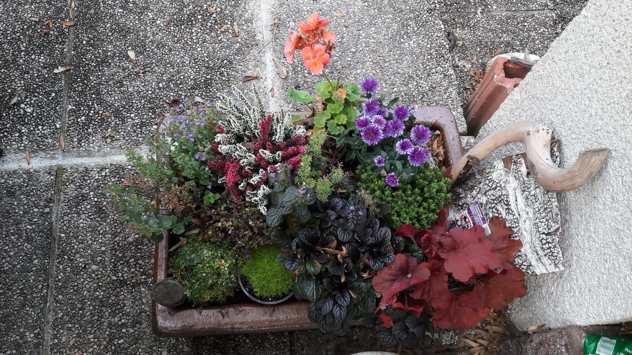 Sautrog Mit Blumen Plants Window Boxes Raised Beds