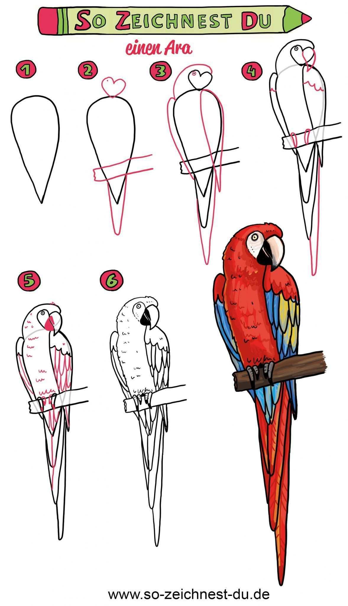 So Zeichnest Du Einen Papagei Einfache Anleitung Comic Zeichnen Lernen Papagei Zeichnung Malen Und Zeichnen