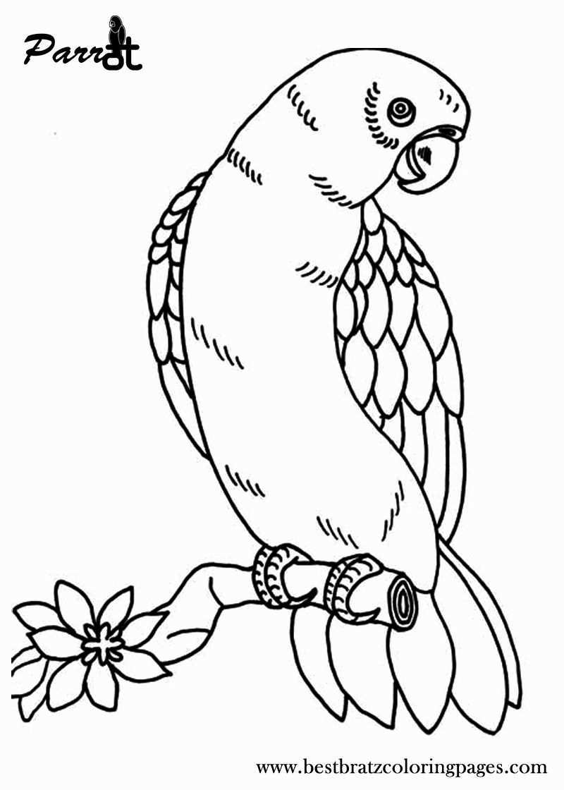 Birds Coloring Pages Printable Beautiful Free Printable Parrot Coloring Pages For Kids In 2020 Bird Coloring Pages Owl Coloring Pages Butterfly Coloring Page