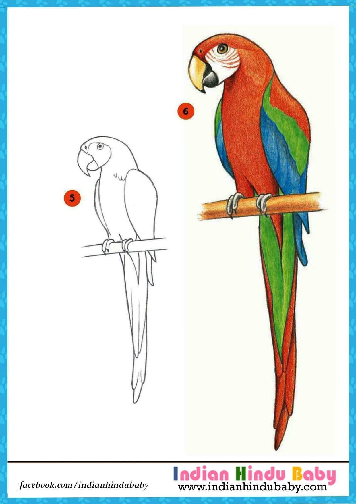 Parrot Drawing Refrence The Beauty Of Colorful Parrot Macau Is Marvellous Teach Your Kid Parrot Drawing Parrots Art Parrot Painting