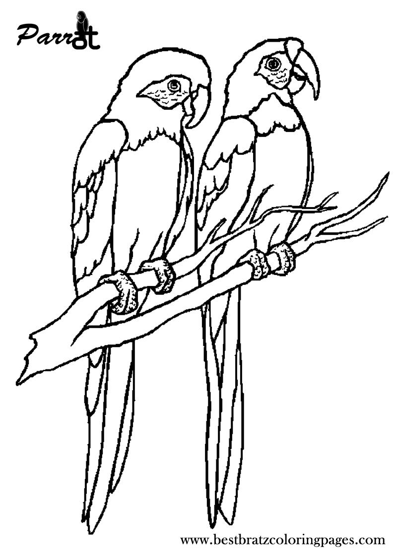 Free Printable Parrot Coloring Pages For Kids Coisas Para Desenhar Colorir Online Passaros Bonitos