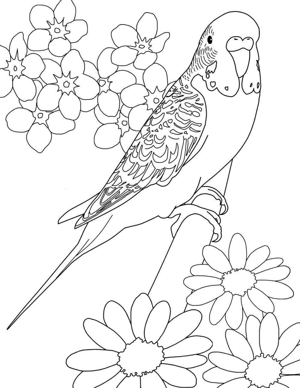 Pin Von Karolin Holzman Auf Vogel Vogel Zeichnen Vogel Malvorlagen Papagei Zeichnung