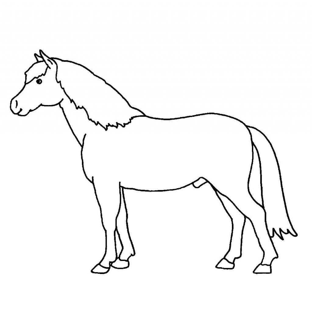 pferdekopf malen vorlage