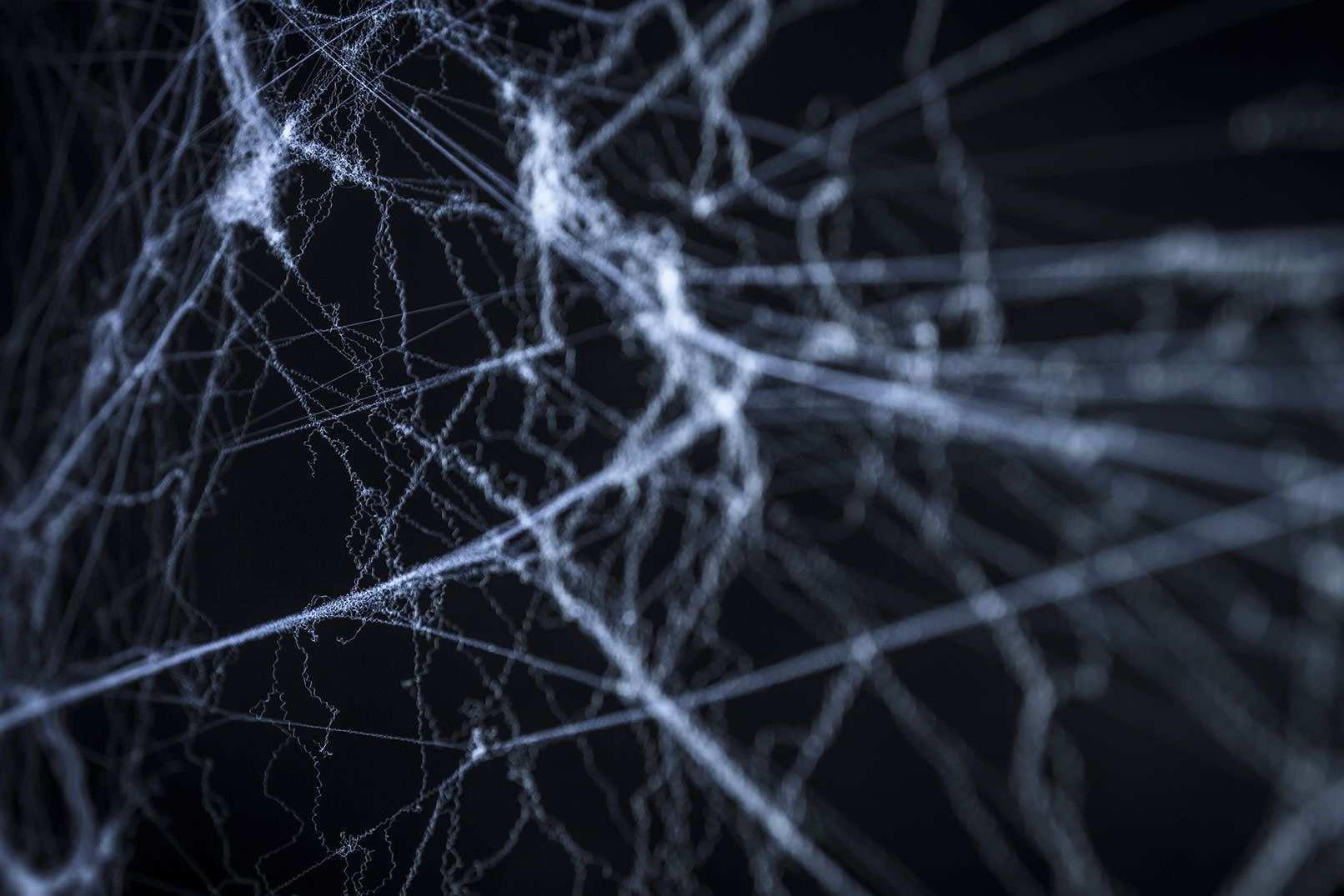 Spinnennetz Bilder Vorlagen Von Spinnweben Fur Composings Spinnennetz Bilder Spinne