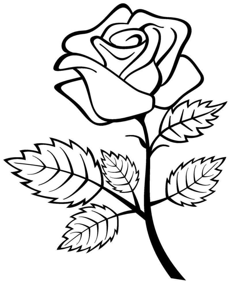 Free Printable Roses Coloring Pages For Kids Rose Coloring Pages Flower Coloring Pages Flower Sketch Images