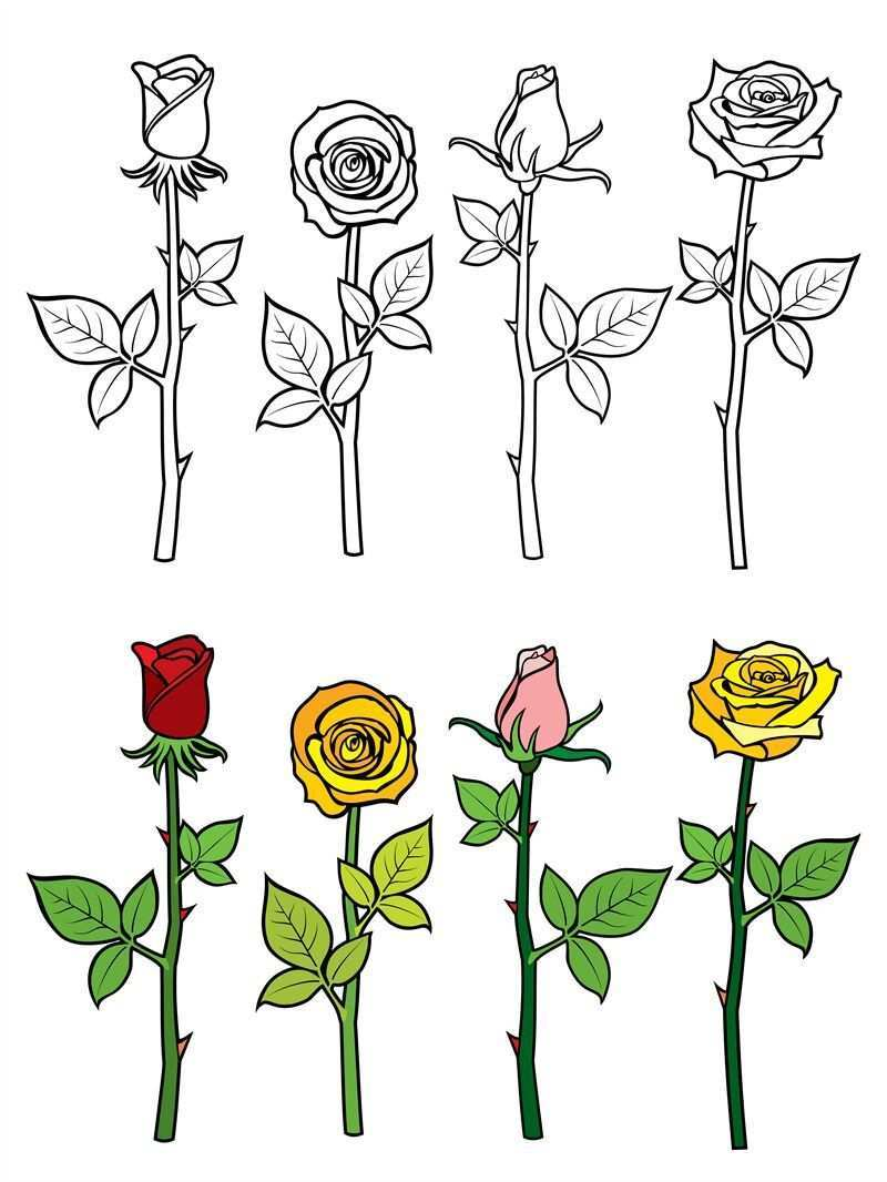 Hand Drawn Rose Coloring Page By Microvector Thehungryjpeg Com Rose Ad Drawn Hand Coloring Adver Rose Gezeichnet Copics Aquarell