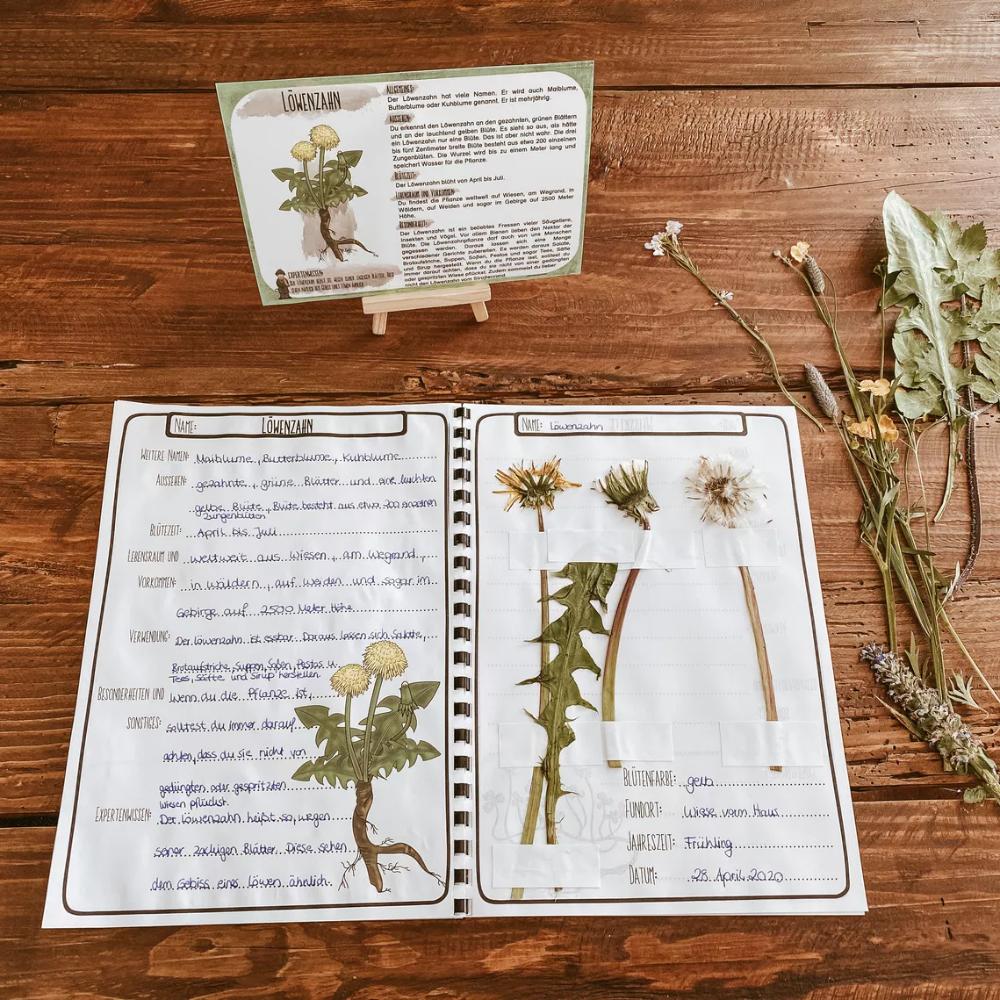 Herbarium Und Steckbriefe Zu Wiesenpflanzen Unterrichtsmaterial Im Fach Sachunterricht Pflanzen Steckbrief Ganseblumchen