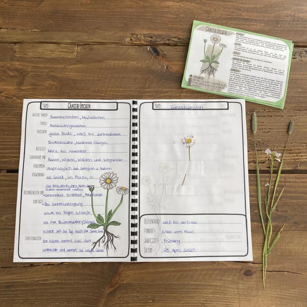 Herbarium Und Steckbriefe Zu Wiesenpflanzen Unterrichtsmaterial Im Fach Sachunterricht Steckbrief Unterrichtsmaterial Rechnen Mit Geld