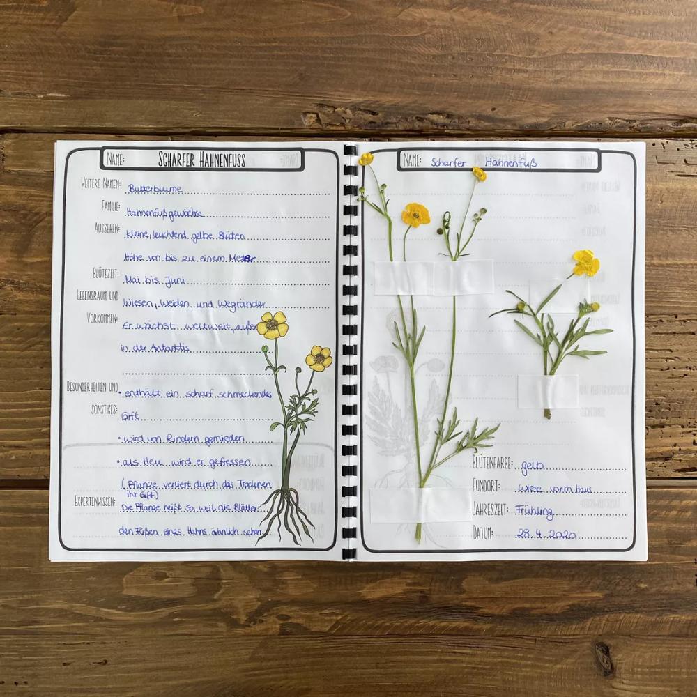 Herbarium Und Steckbriefen Zu Wiesenpflanzen Download In 2020 Naturtagebuch Herbarium Vorlage Basteln Mit Kleinkindern Herbst
