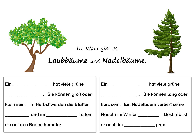 Unterschied Laubbaum Und Nadelbaum Wald Pflanzen Baume Differenziert Unterrichtsmaterial Im Fach Sachunterricht Laubbaum Laub Baum