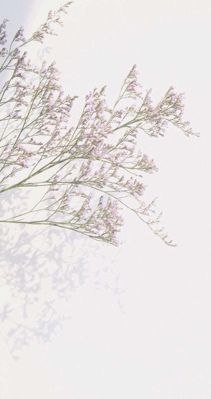 F A L L I N G Rnillktea Cr Line Deco By Ten X Ten In 2020 Iphone Background Wallpaper Flower Phone Wallpaper Flower Aesthetic