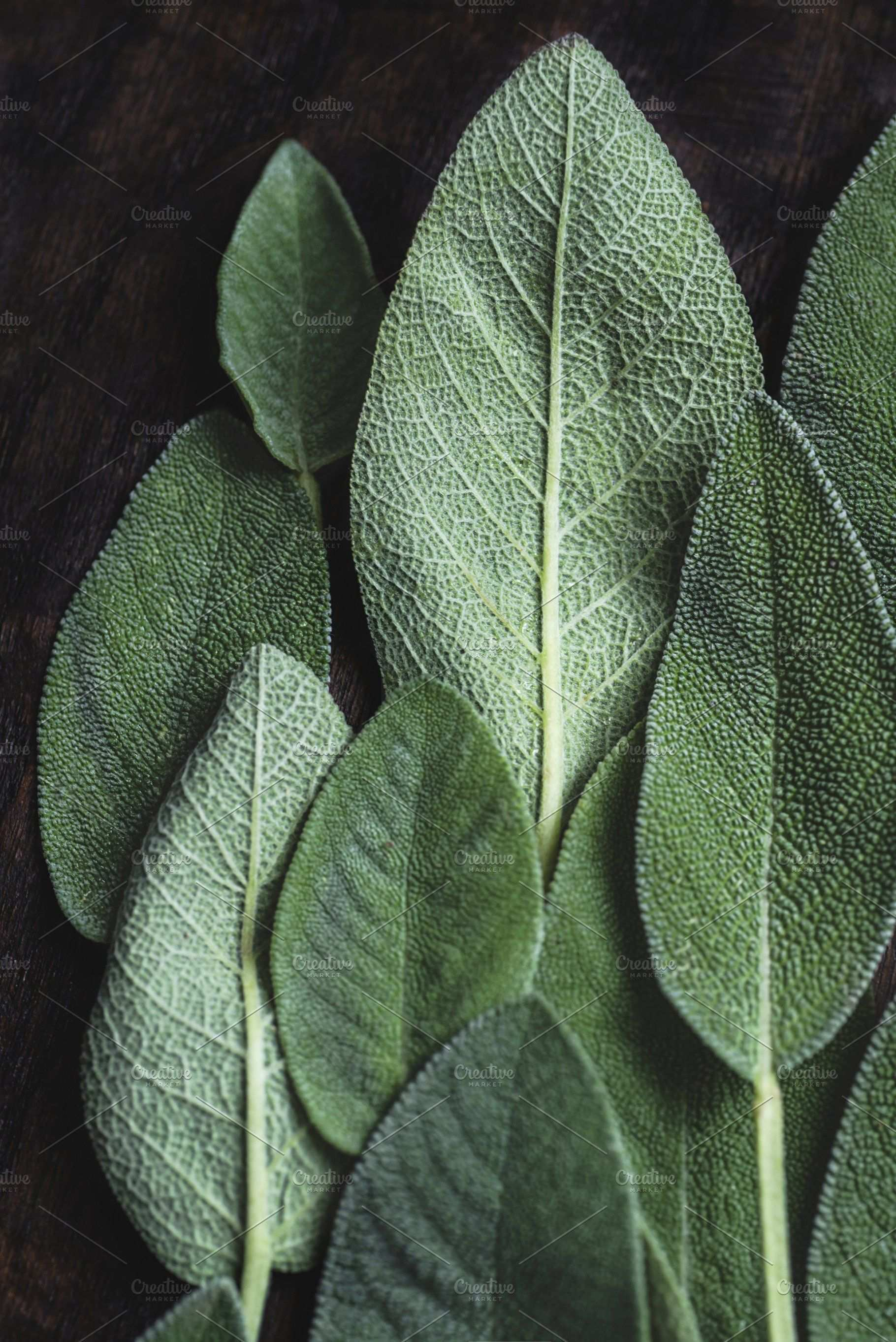 Natural Background With Sage Leaves Natural Background Sage Leaves Leaf Photography