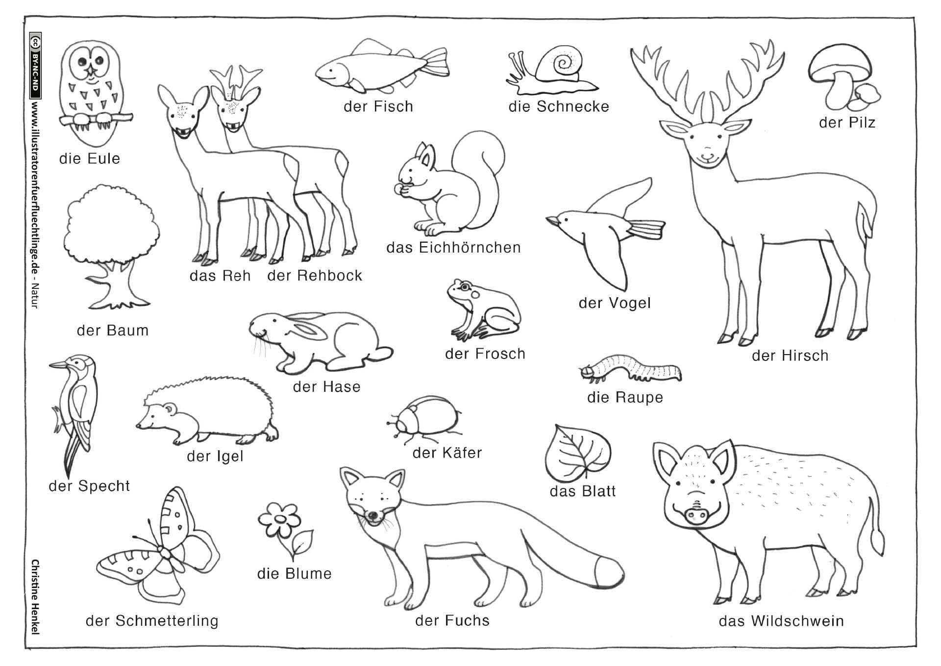 Wald Tiere Pflanzen Wald Grundschule Tiere Tiere Malen
