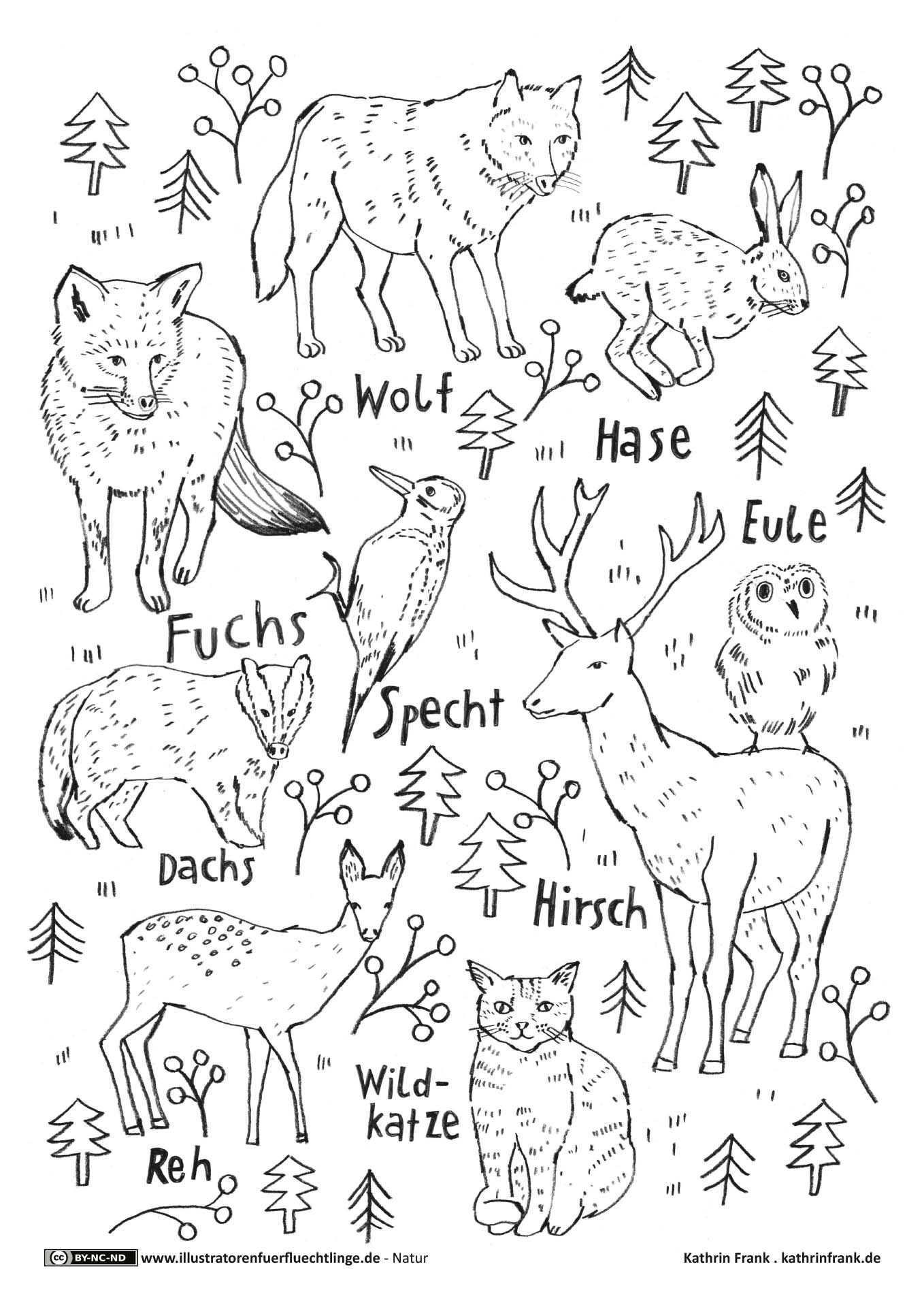 Waldtiere Waldtiere Schulideen Ausmalen