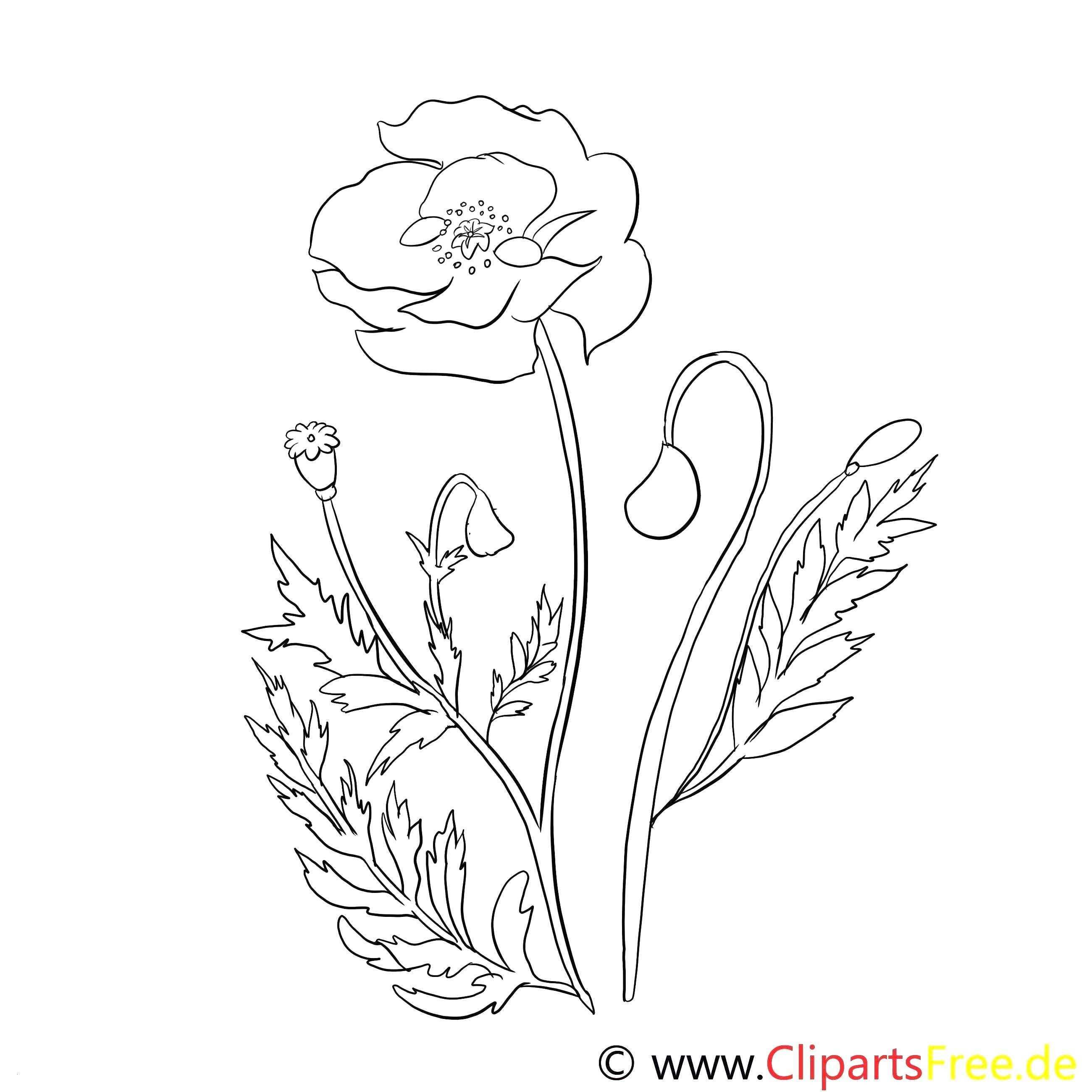 Fruhling Window Color Vorlagen Malvorlagen Blumen Malvorlagen Ausmalbilder