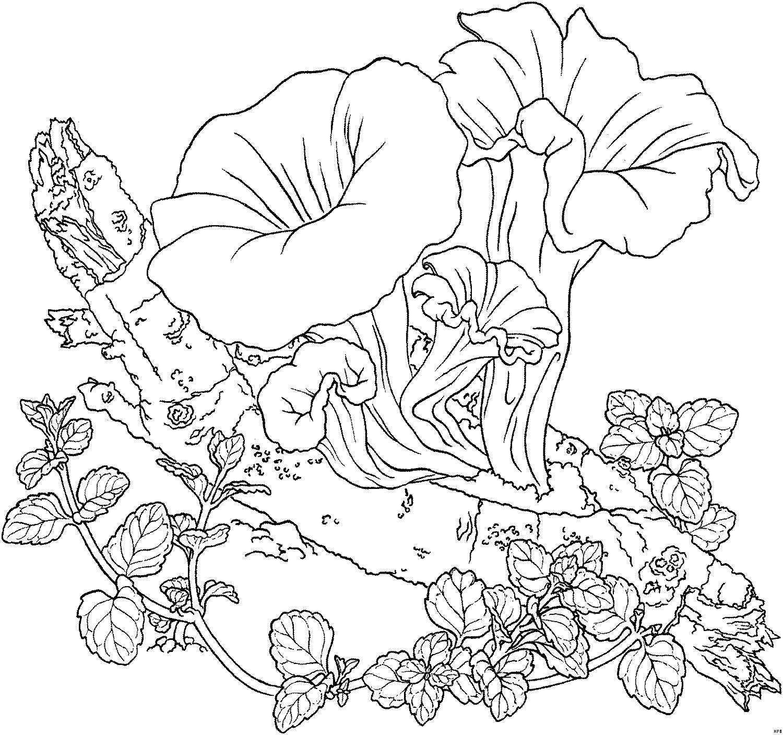 Malvorlagen Pflanzen In 2020 Malvorlagen Blumen Malvorlagen Ausmalbilder