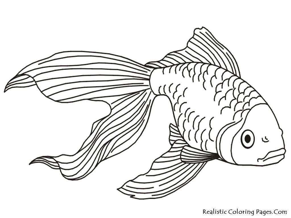 Gold Fish Kids Coloring Pages Realistic Jpg 1024 768 Malvorlagen Tiere Malvorlagen Kostenlose Ausmalbilder