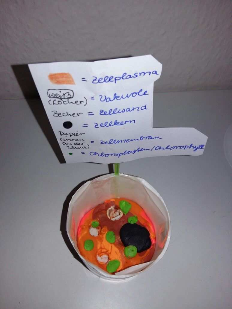 Die Pflanzliche Zelle Als Modell Einkaufsliste Zum Ausdrucken Stoffwechsel Ankurbeln Spickzettel